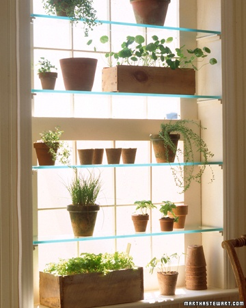 Green House Window